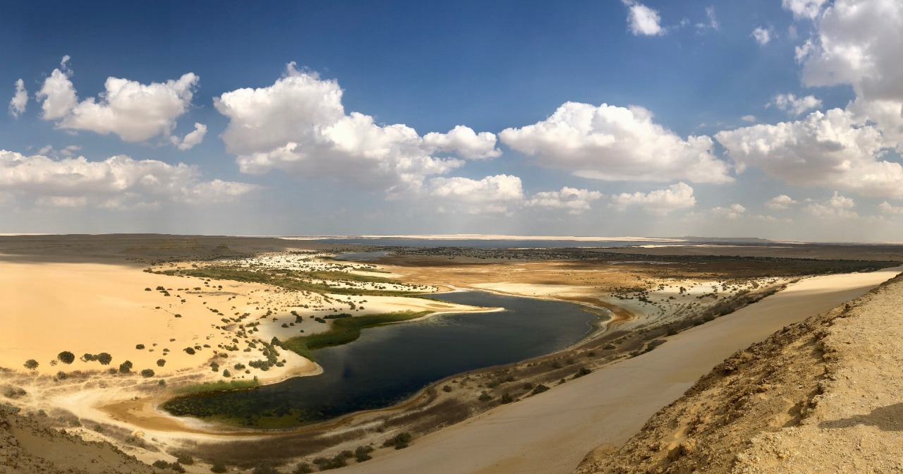 About Oasis of Egypt