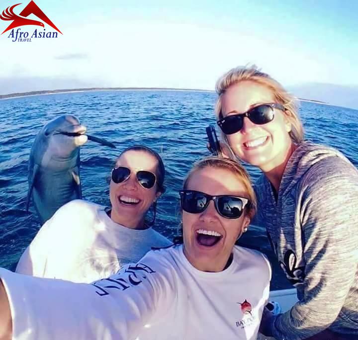Show de Golfinhos